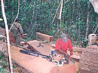Logging_in_Prey_lang200.jpg